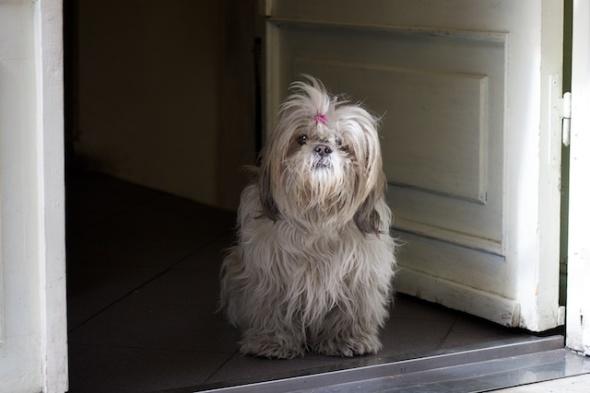 little dog in doorway