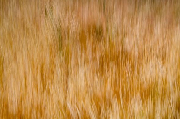 Abstract photo of dry grass